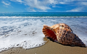 Sea Shell on Sea Shore Wallpaper
